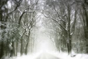 Trail Snow by Viviane Fedieu Daniel