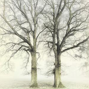 Twin by Viviane Fedieu Daniel