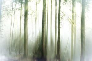 Whiteforest by Viviane Fedieu Daniel