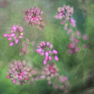 Wildflowers by Viviane Fedieu Daniel