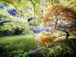 Zen Garden by Viviane Fedieu Daniel