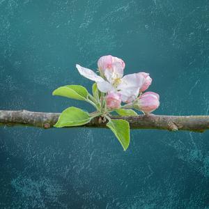 cherry by Viviane Fedieu Danielle
