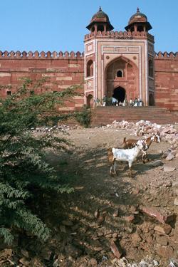 Buland Darwaza, Fatehpur Sikri, Agra, Uttar Pradesh, India by Vivienne Sharp
