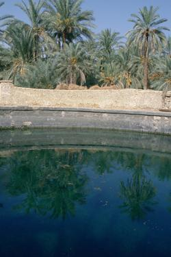 Cleopatras Pool, Siwa, Egypt by Vivienne Sharp