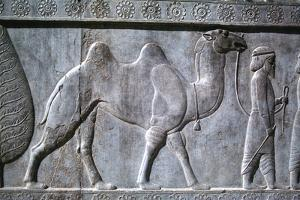 Relief of Parthians, the Apadana, Persepolis, Iran by Vivienne Sharp