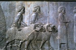 Relief of Sogdians, the Apadana, Persepolis, Iran by Vivienne Sharp
