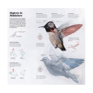 An Illustration Depicting a Comparison Between a Pigeon and a Hummingbird by Vlad Rodriguez