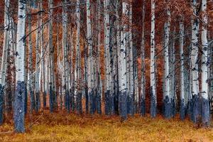 Autumn Forest by Vladimir Kostka