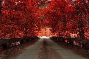 Bridge (Red) by Vladimir Kostka