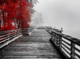 Fall Walkway By Vladimir Kostka