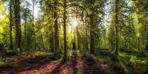 Golden Forest by Vladimir Kostka