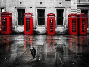 London Phone Booths Bird by Vladimir Kostka