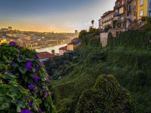 Porto Portugal Gardens by Vladimir Kostka