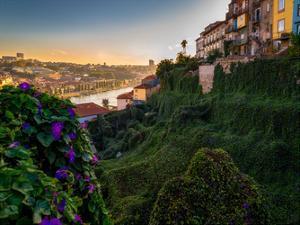 Portugal Porto Garden by Vladimir Kostka