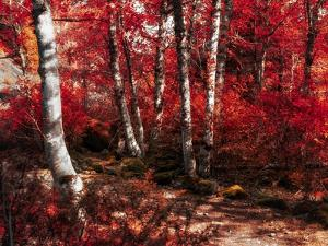 Red Trees Path by Vladimir Kostka
