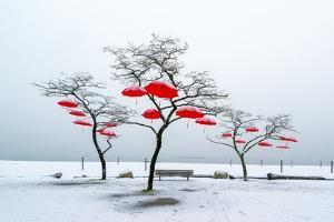 Red Umbrellas by Vladimir Kostka