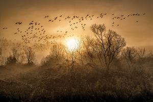 The Flight by Vladimir Kostka
