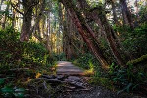 The Path by Vladimir Kostka