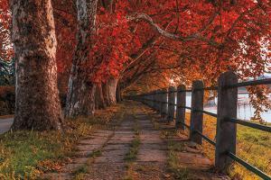 Walk by the River by Vladimir Kostka