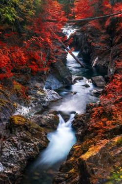 Water in the Fall by Vladimir Kostka