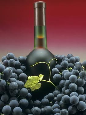 A Bottle of Red Wine with Black Grapes by Vladimir Shulevsky