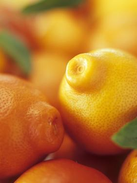Several Mandarin Oranges with Leaves by Vladimir Shulevsky