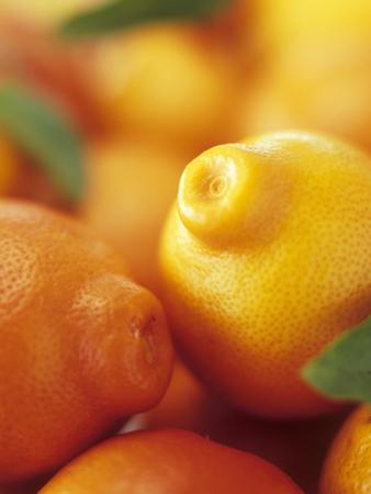 Several Mandarin Oranges with Leaves