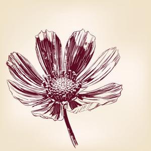 Beautiful Flower Daisies Vector Illustration by VladisChern
