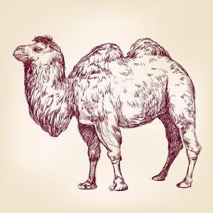 Camel Vector Illustration by VladisChern