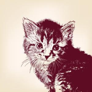 Cat Vector Illustration by VladisChern