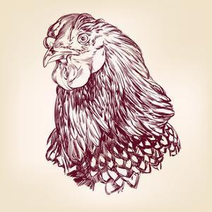 Chicken Vintage Hand Drawn Vector Illustration by VladisChern