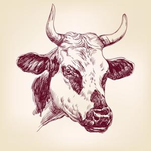 Cow Hand Drawn Vector Llustration Realistic Sketch by VladisChern