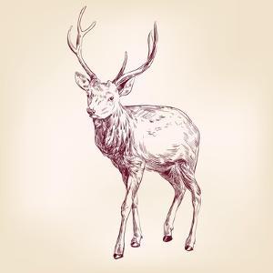 Deer Hand Drawn Vector Llustration Realistic Sketch by VladisChern
