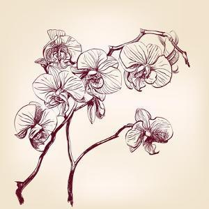 Floral Orchid Hand Drawn Vector by VladisChern