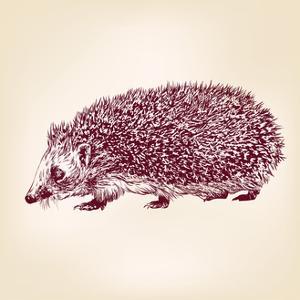 Hedgehog Hand Drawn Vector Llustration Realistic Sketch by VladisChern