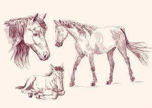 Horses Collection by VladisChern