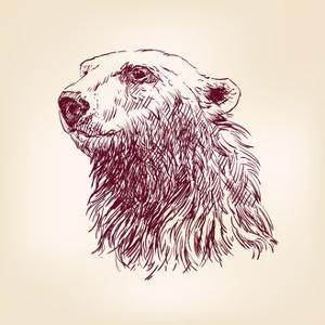 Polar Bear Hand Drawn by VladisChern