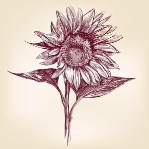 Sunflower Hand Drawn Vector Llustration Realistic Sketch by VladisChern