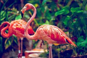 Pink Flamingo Close-Up in Singapore Zoo by Volodymyr Goinyk