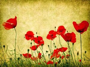 Photo Of A Poppies Pasted On A Grunge Background by Volokhatiuk