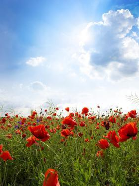 Red Poppies on Green Field, Sky and  Clouds by Volokhatiuk