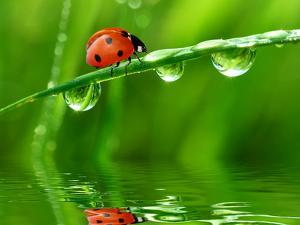 Fresh Morning Dew And Ladybird by volrab vaclav