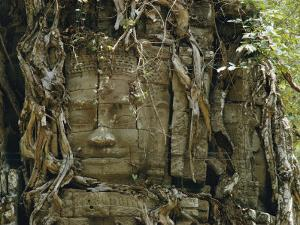 Temple Ruins Covered with Tree Roots by W. E. Garrett