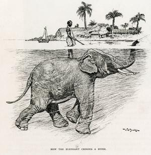 How the Elephant Crosses a River by W.H. Drake