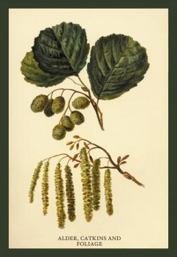 Alder, Catkins and Foliage by W.h.j. Boot