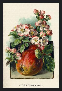 Apple Blossom and Fruit by W.h.j. Boot