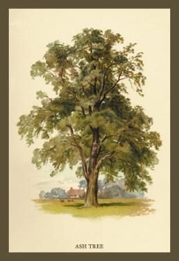 Ash Tree by W.h.j. Boot
