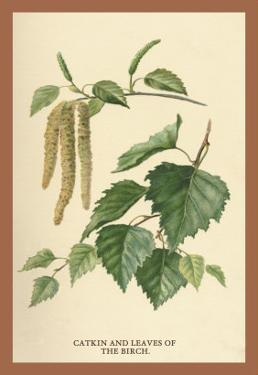 Catkin and Leaves of the Birch by W.h.j. Boot