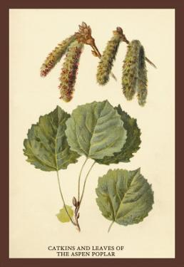Catkins and Leaves of the Aspen Poplar by W.h.j. Boot