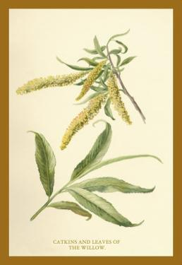Catkins and Leaves of the Willow by W.h.j. Boot